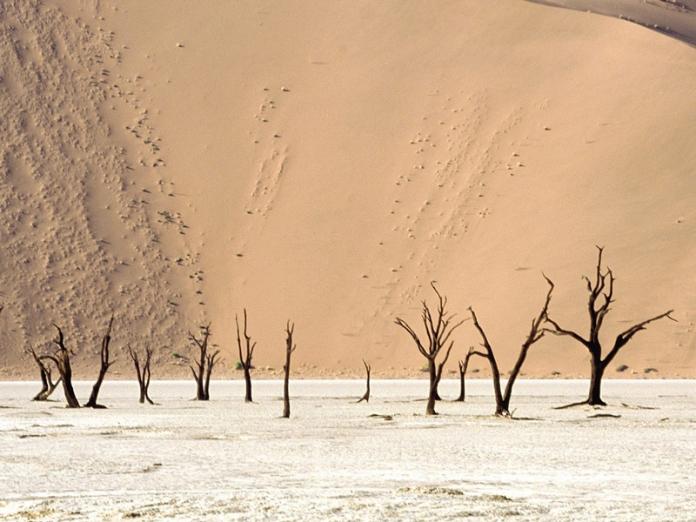 Dead_Ulei,_Namib_Desert,_Namibia,_Africa